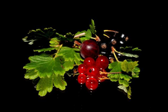 Смородина - ягода для гіпертоніків