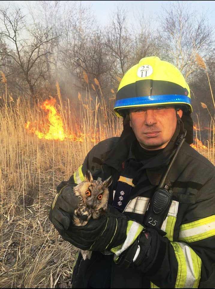 В Украине в пожарах гибнут сотни животных