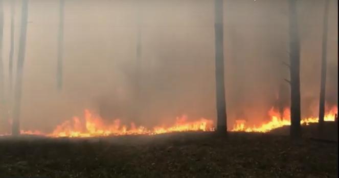 Лісові пожежі в Житомирській області