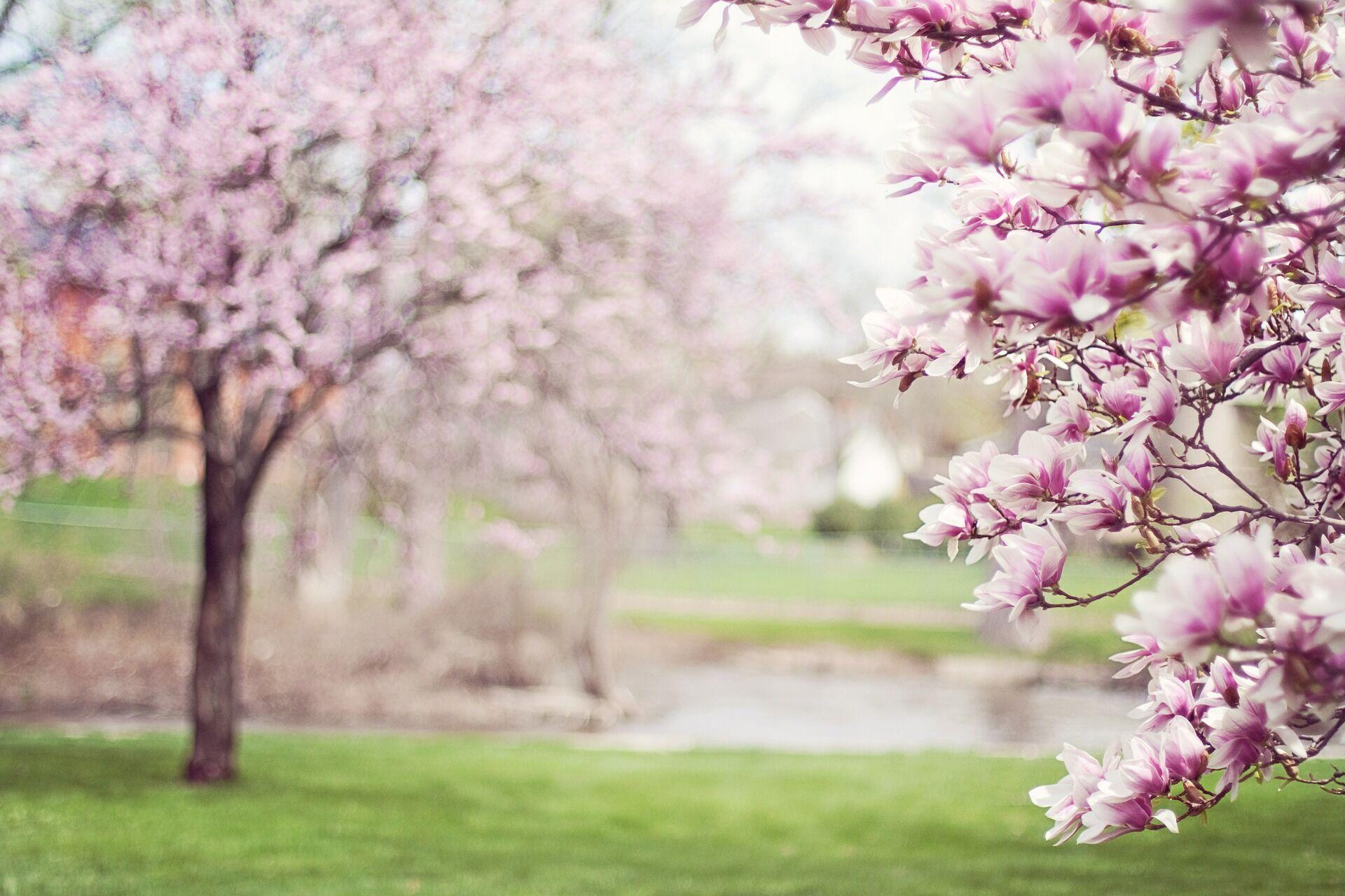 Прогноз погоды на весну