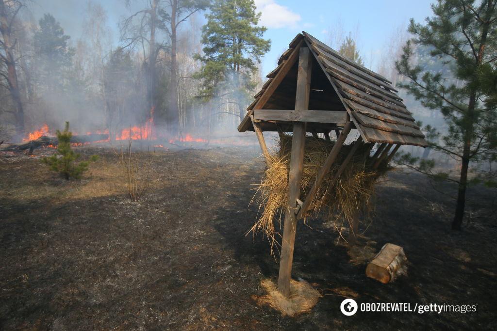 Пожежа в Чорнобильській зоні може стати міжнаціональною