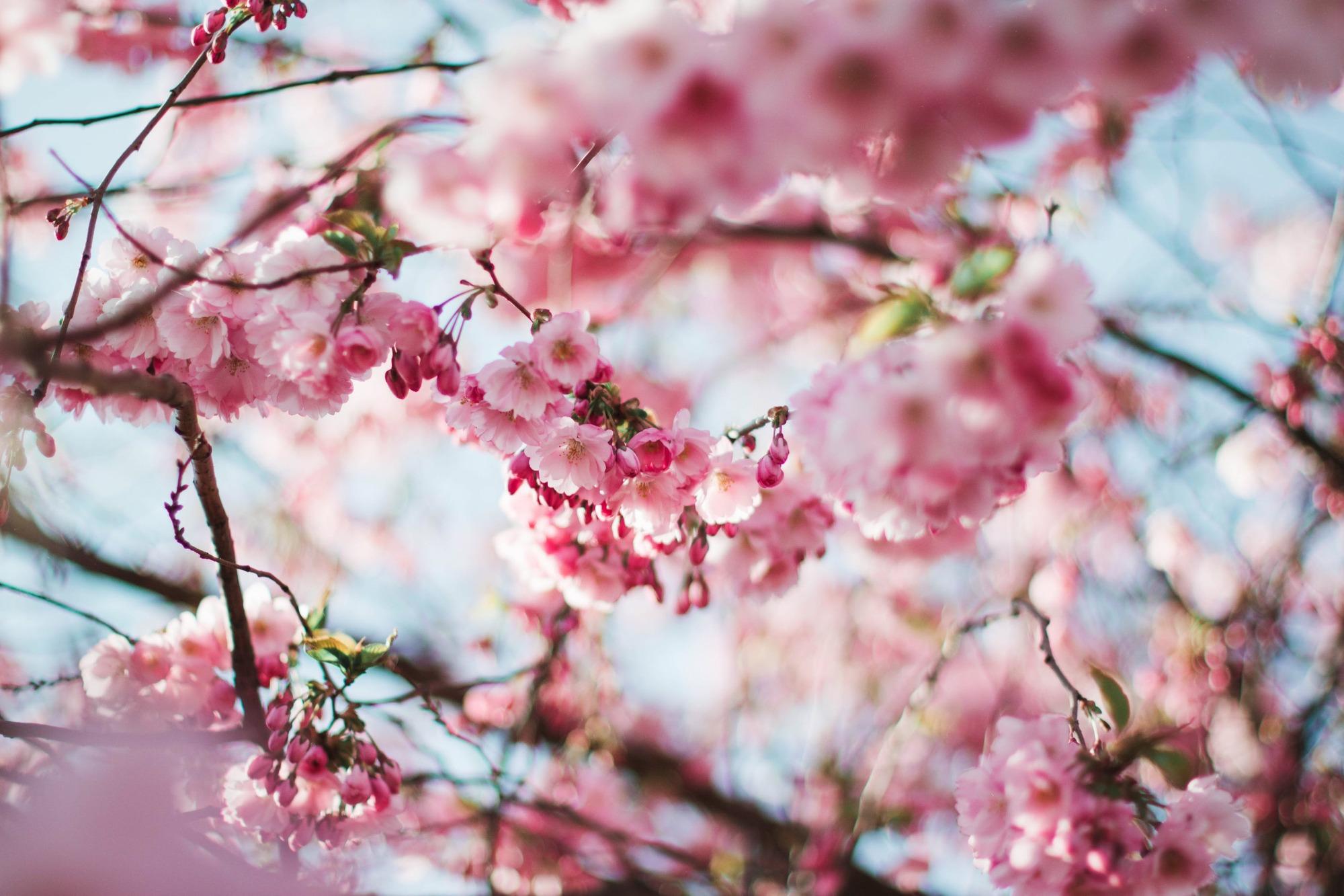 У неділю Світлого тижня за традицією зустрічали весну
