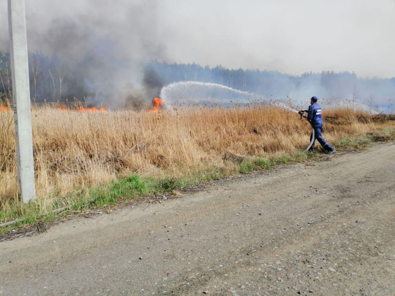 Вогонь перекинувся на ліс: в Києві горів Голосіївський парк