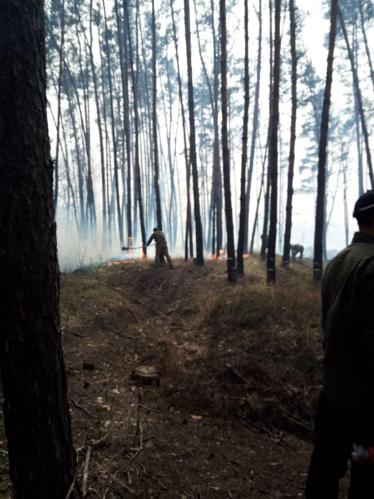 Пожежа в Голосіївському парку