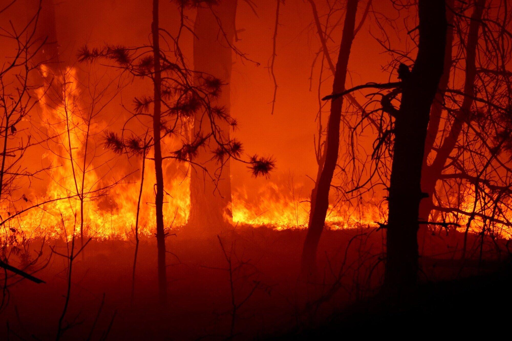 Житомирщину охопили масштабні пожежі