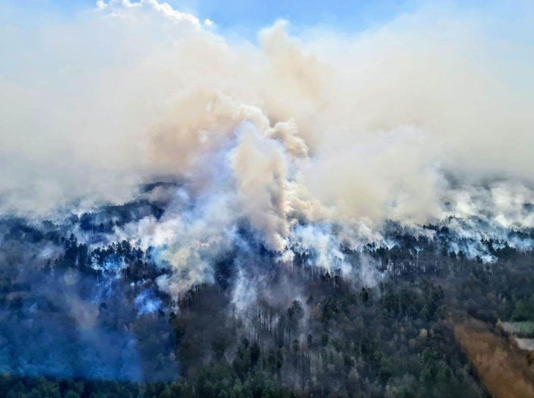 Выгорело почти 5 тысяч га: Аваков сказал, когда потушат пожары на Житомирщине