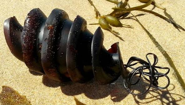Как на самом деле выглядят яйца акулы: фото изумили сеть