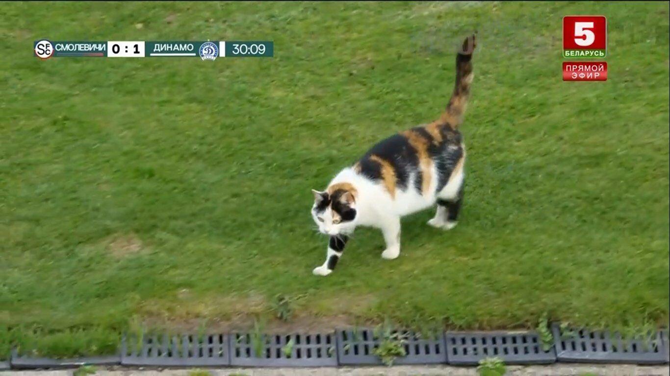 Товстий кіт спробував зірвати футбольний матч у Білорусі