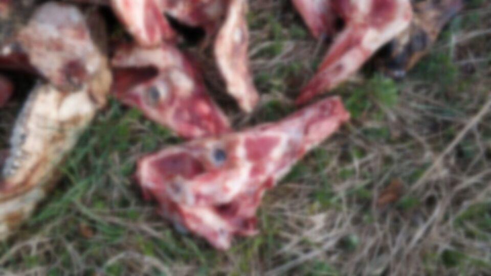 У Карпатах невідомі викинули на берег річки рештки тварин