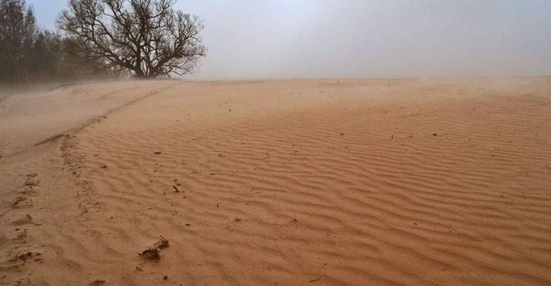 Поля в Черниговской области после пыльной бури