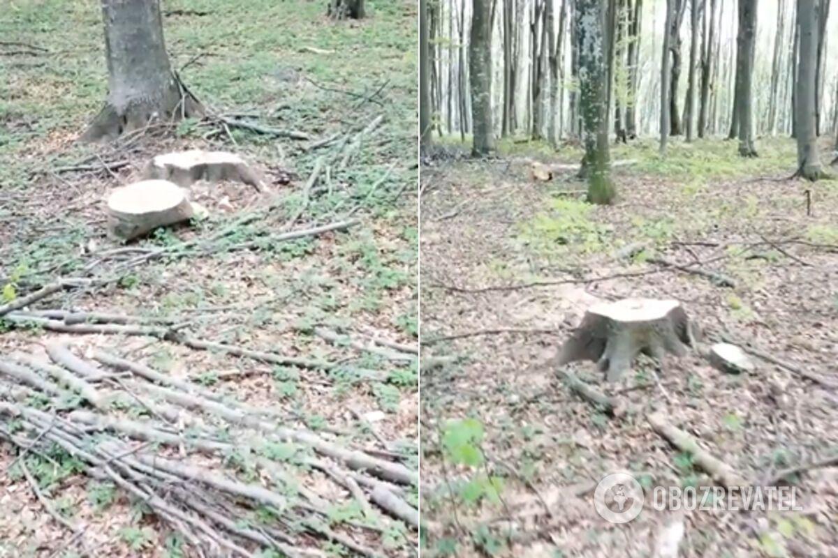 На Закарпатті СБУ викрила масштабне розкрадання лісів на 14 млн грн
