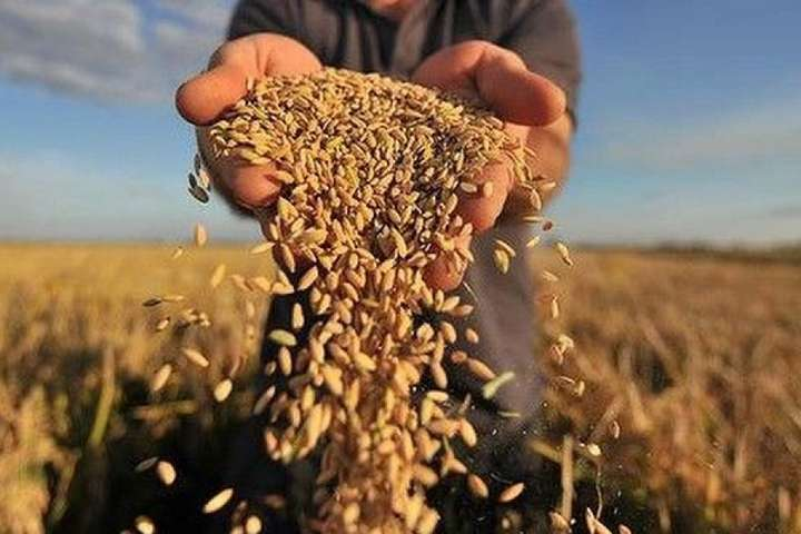 Из-за засухи зерно и хлеб подорожают