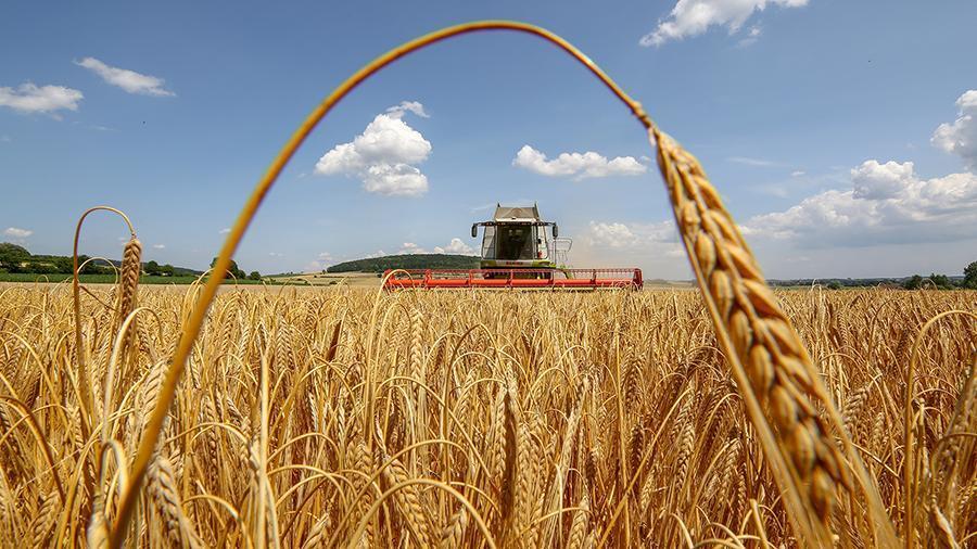 Фермерам придется вкладывать деньги, чтобы вырастить урожай во время засухи