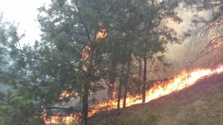 На півночі Одеської області горить ліс