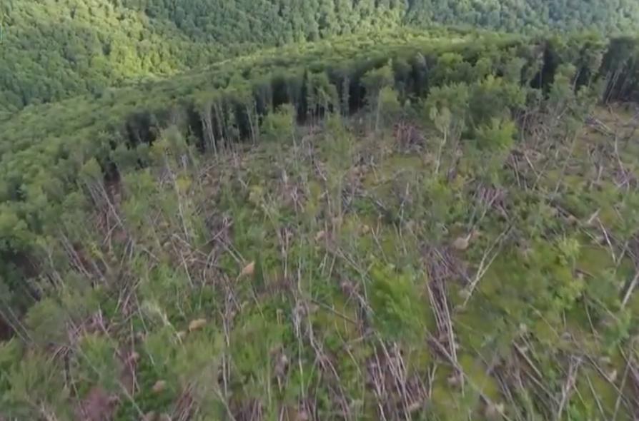 На Закарпатье СБУ разоблачила масштабное хищение лесов на 14 млн грн