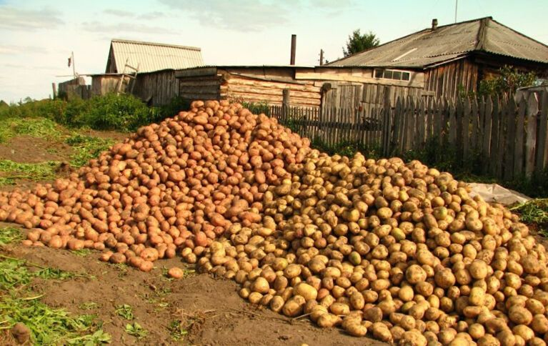 Картофель в этом году подорожает