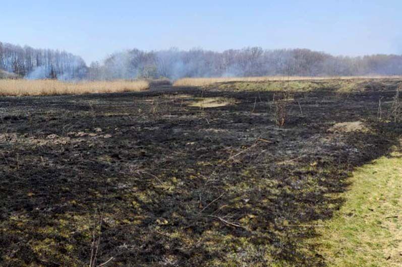 Пожежі в екосистемах