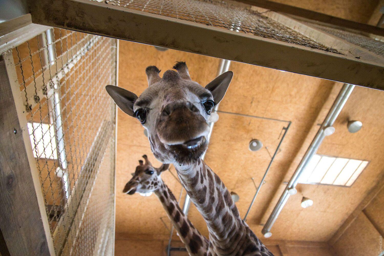 Одесский контактный зоопарк просит денег на корм животным