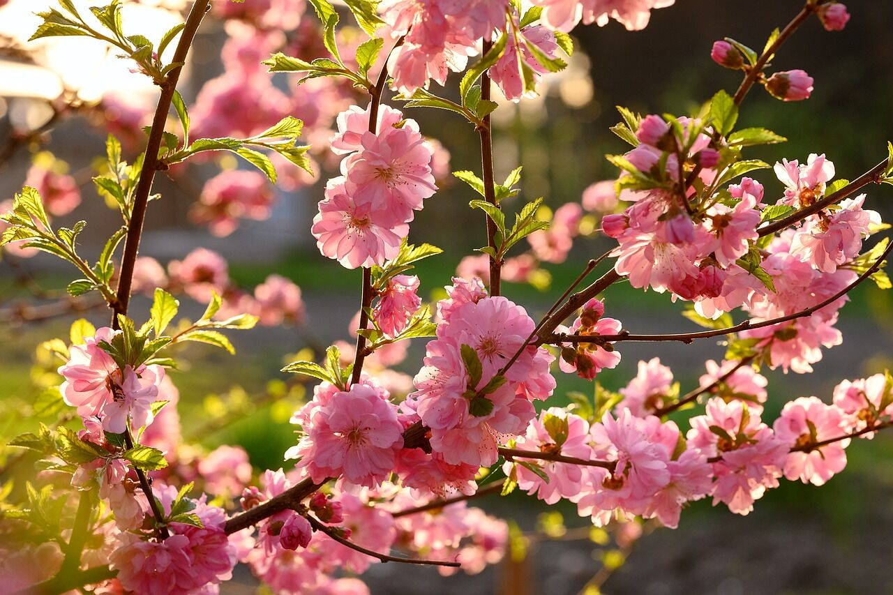 Прикмети 22 травня: в День Миколая стежать за погодою