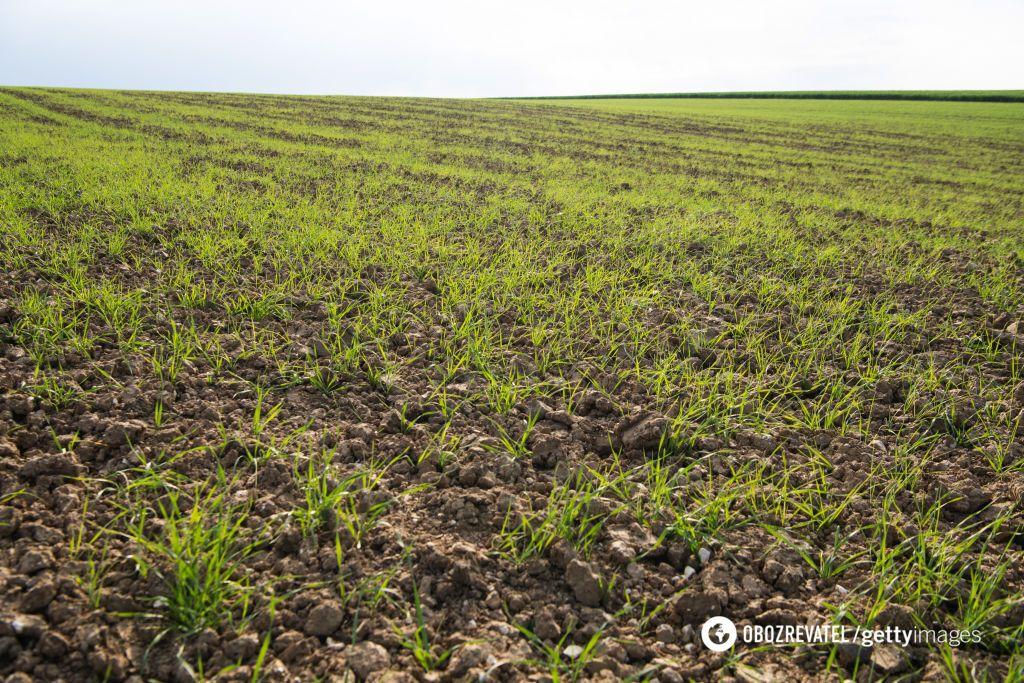 Фермер из Одесской области не смог расплатиться по счетам из-за засухи