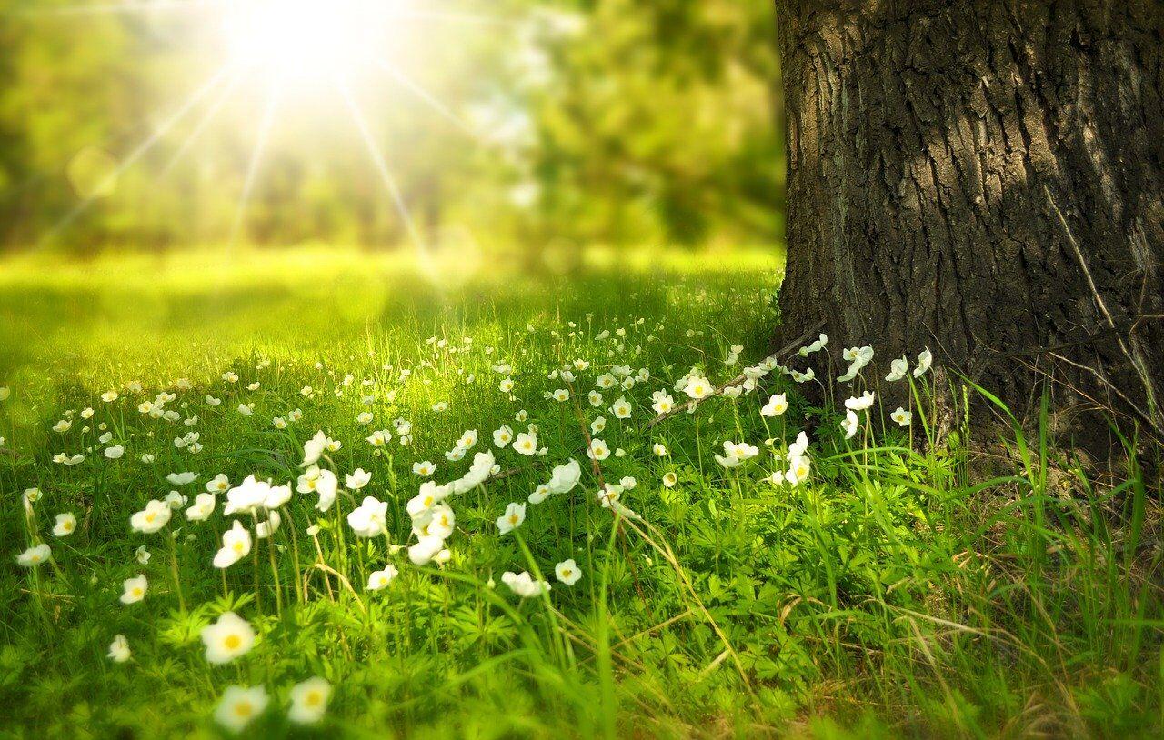 За прикметою, Вознесіння вважається символом переходу до літа