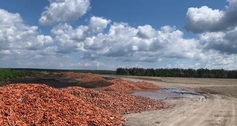 Під Києвом викинули на смітник тонни моркви