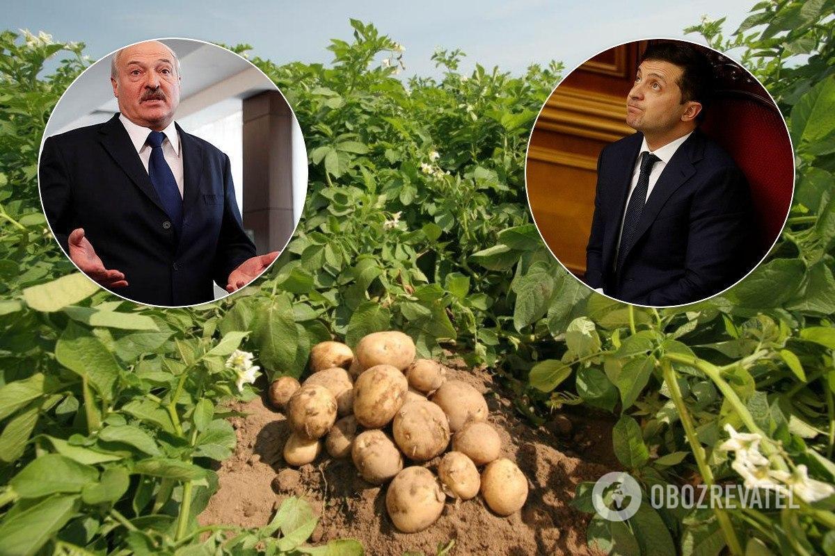 Урожай картоплі