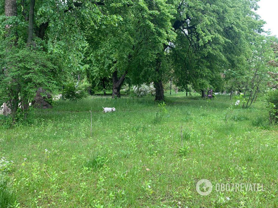 Маріїнський парк у Києві