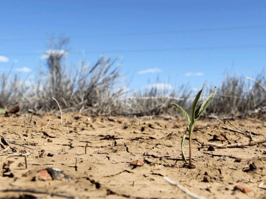 Опублікований масштабний прогноз погоди на літо