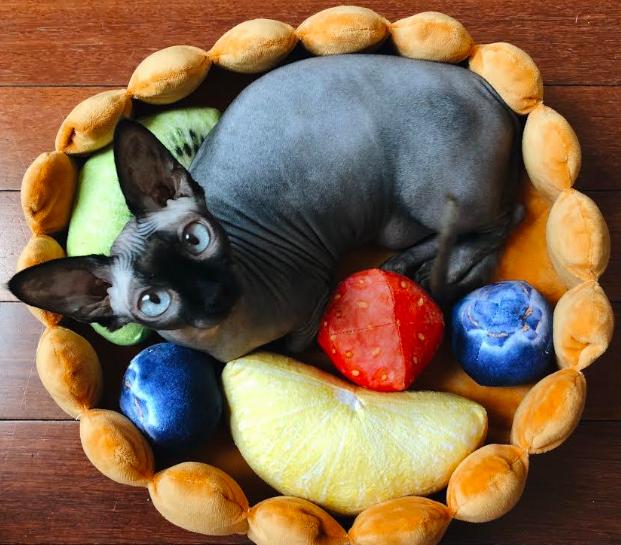 Кровать с фруктами для кота