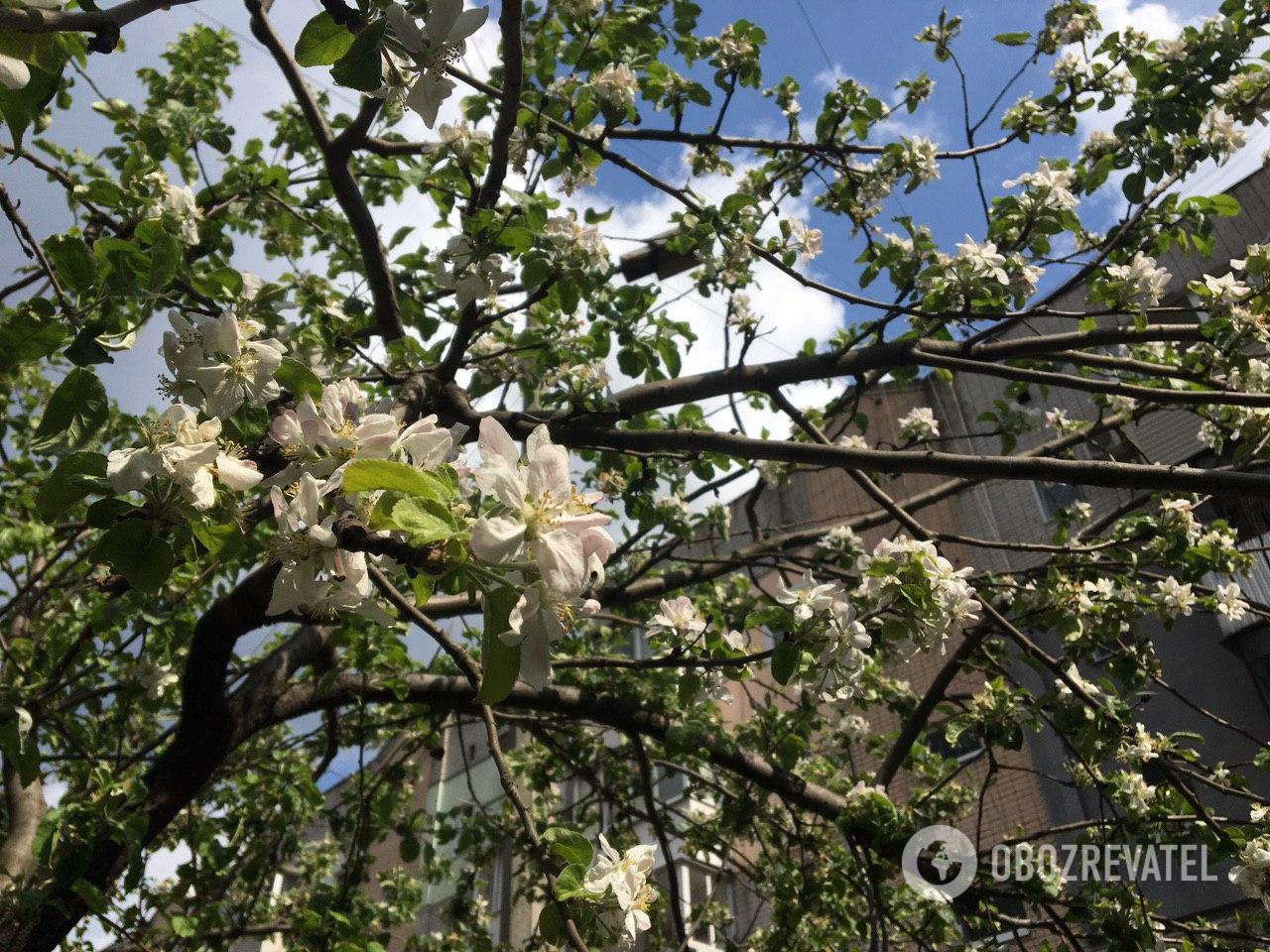 Деревья готовятся к лету
