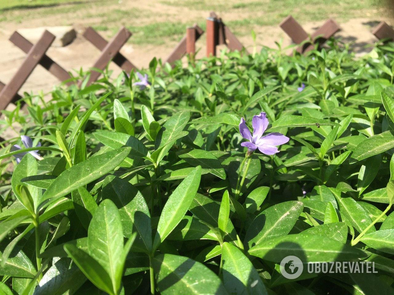 Жители Днепра стараются поливать растения