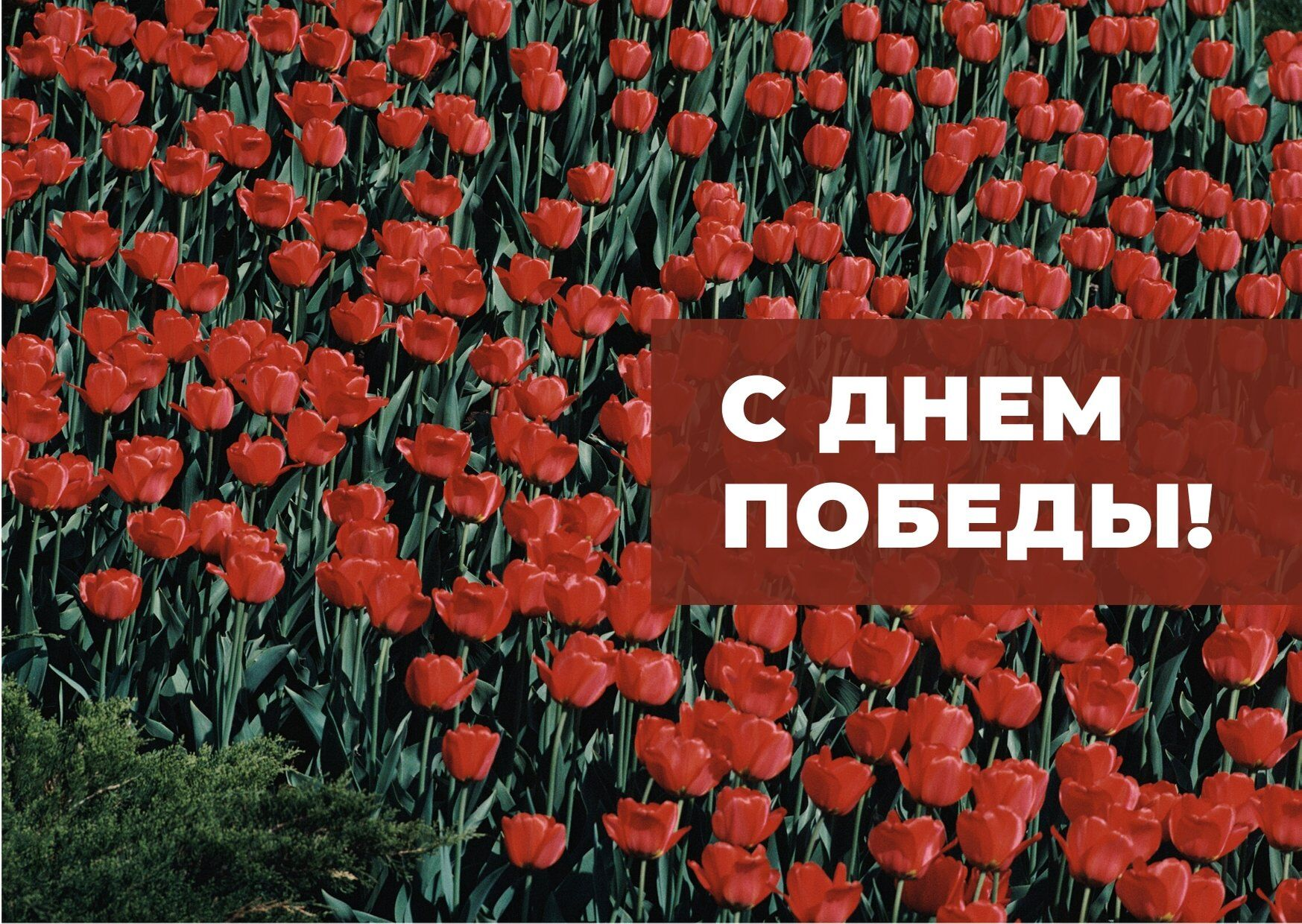 Поздравление на 9 мая