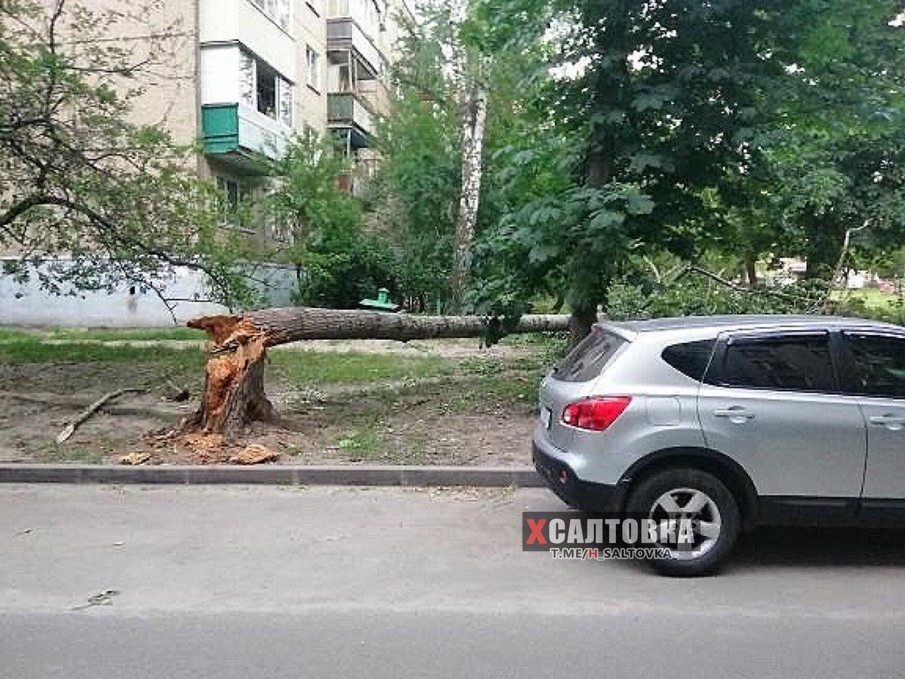 Упавшее дерево в Харькове