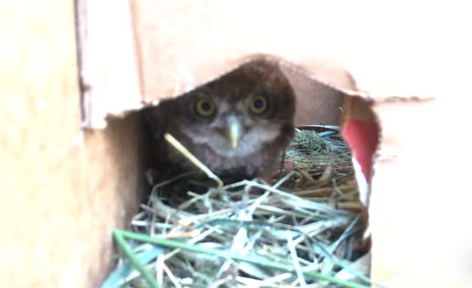 Птенцы выпали из гнезда из-за обстрела