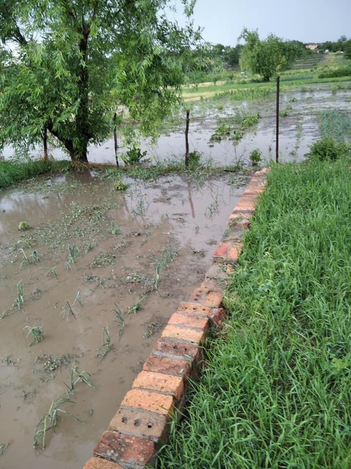 Огороды людей также затопило
