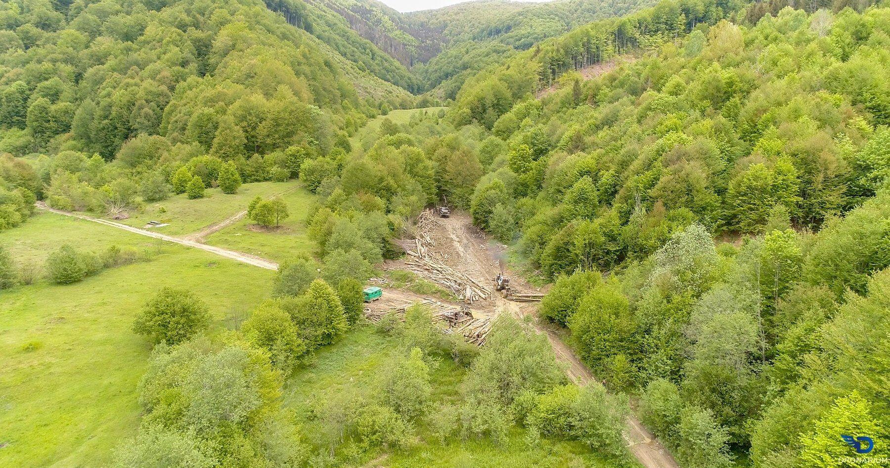 Масштабы вырубки в Карпатских горах