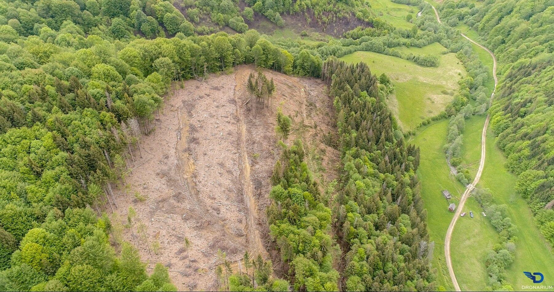 За год объемы вырубки выросли в семь раз