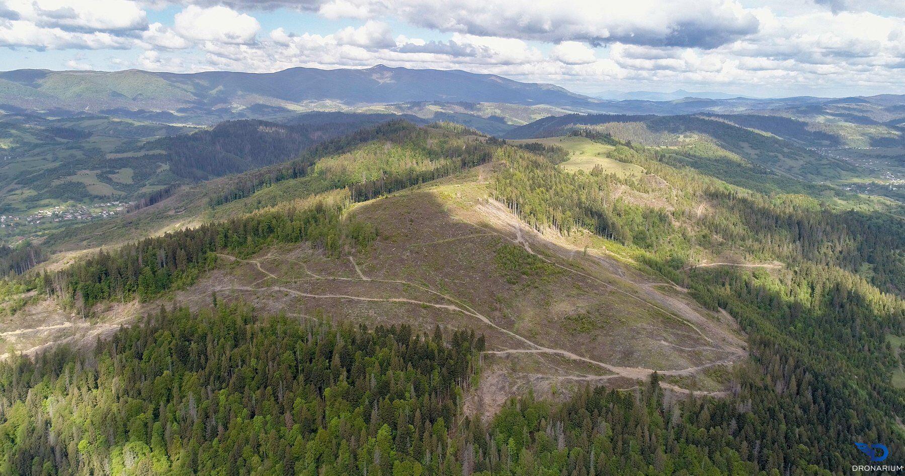 Катастрофическая ситуация с вырубкой леса в Карпатах