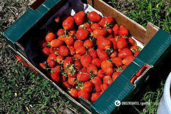 Цены на клубнику выросли до 100 грн