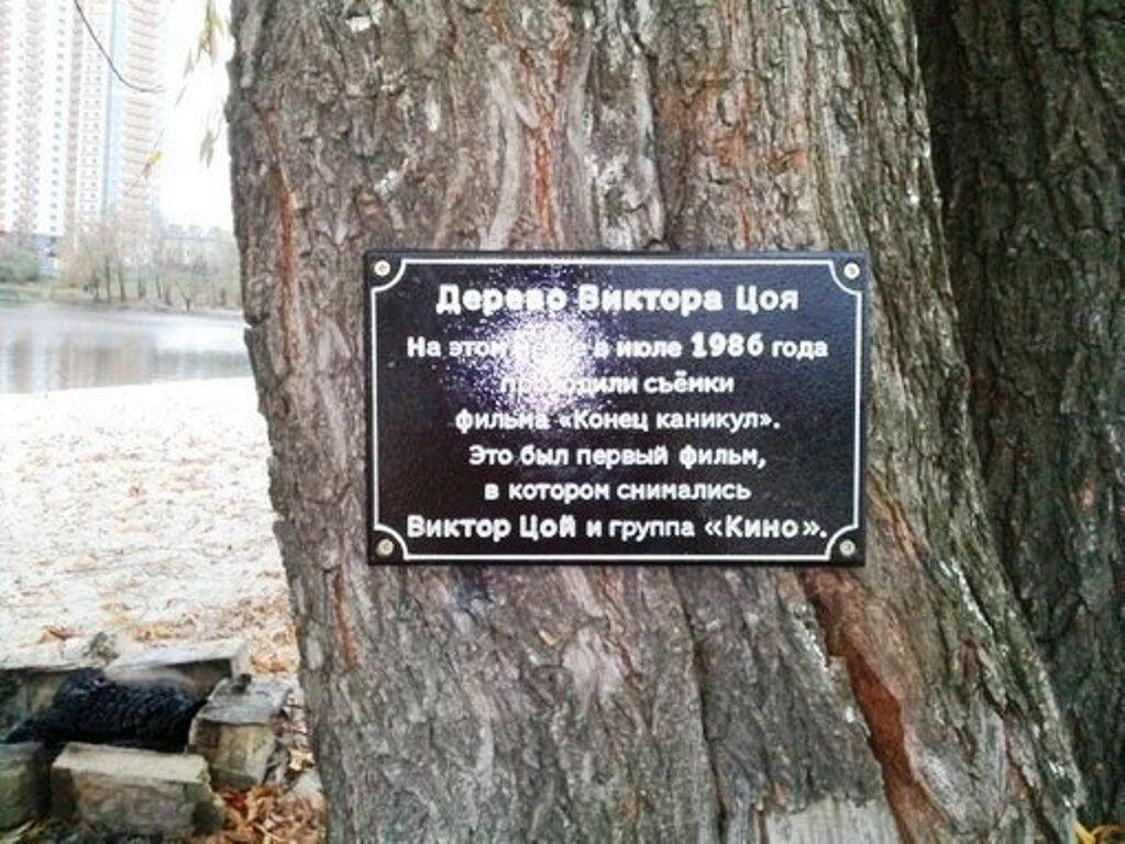 Дерево Віктора Цоя