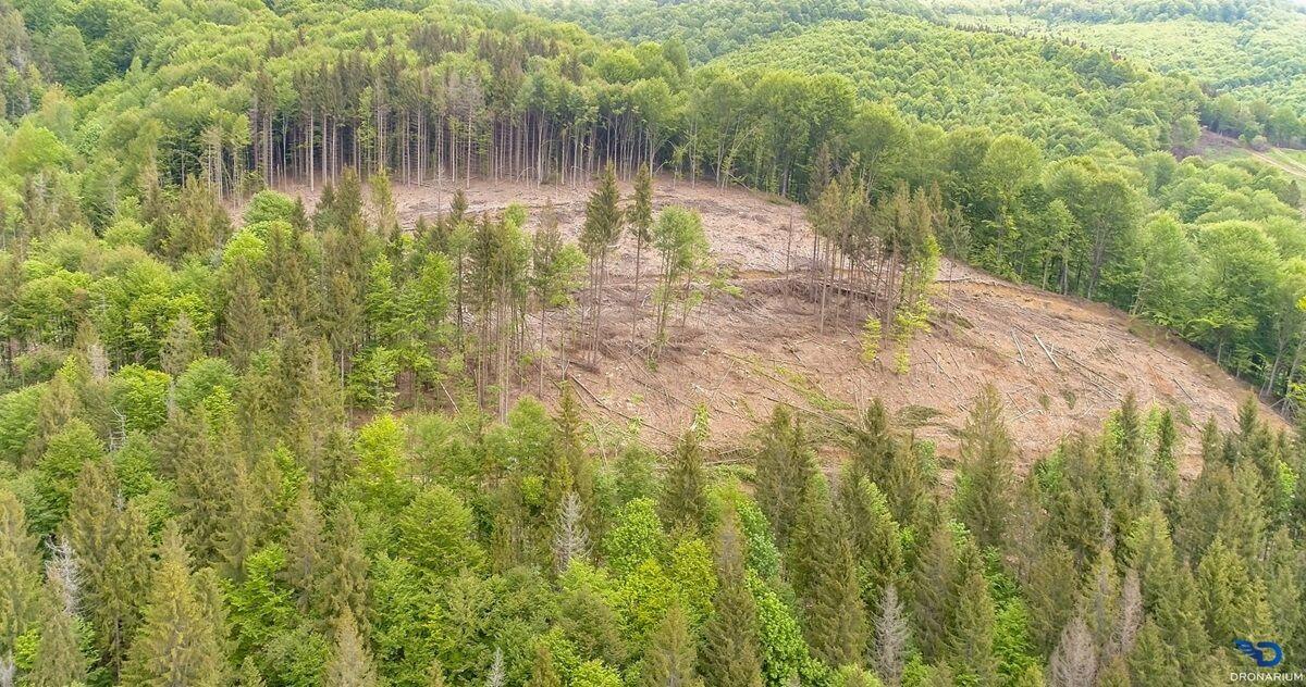 Наслідки незаконного вирубування лісів у Карпатах