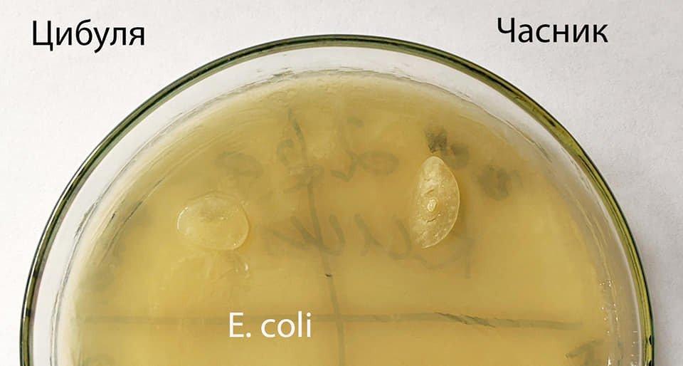 Чеснок и лук не убивают бактерии