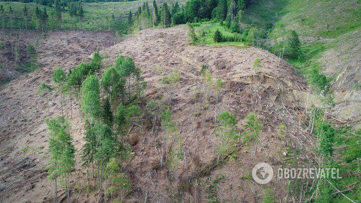 Масштаби вирубування лісу в Карпатах