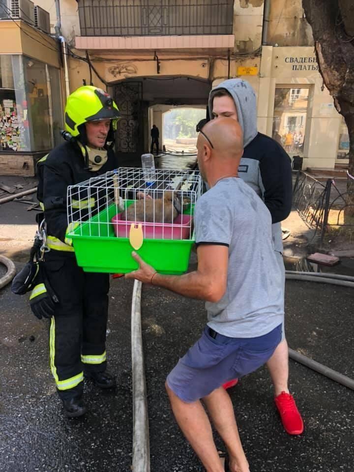 Пожарные спасли кролика