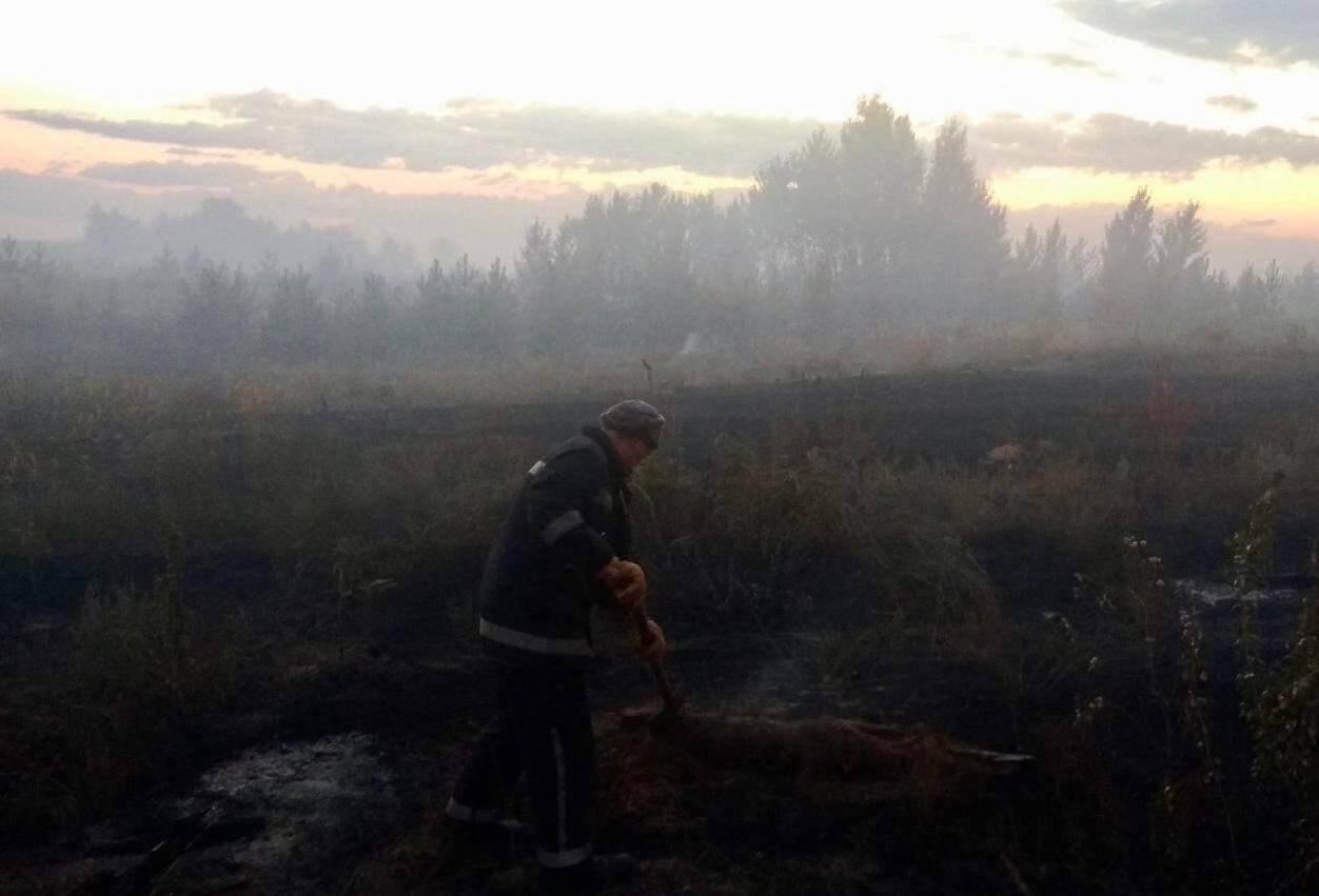 У результаті зайнялися суха трава, чагарники й дерева