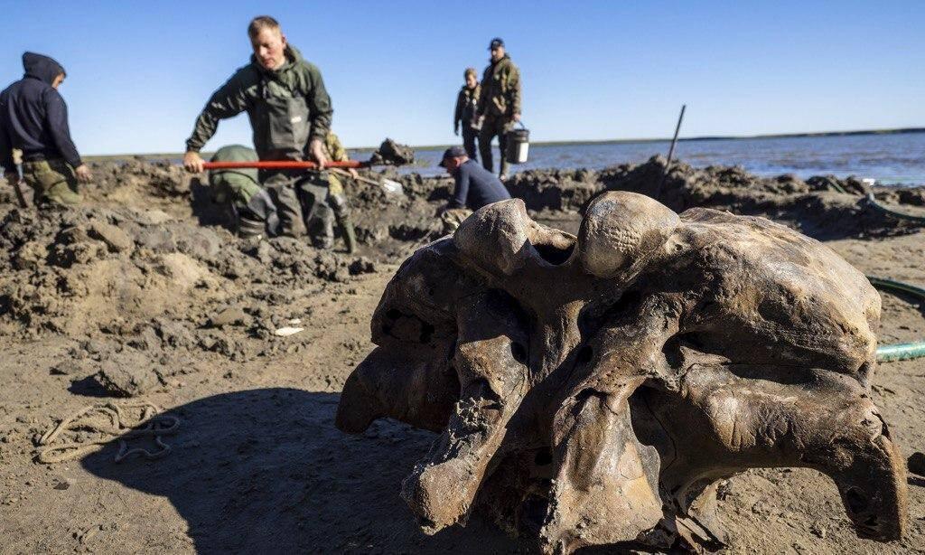 Ученым удалось найти еще больше костей мамонта