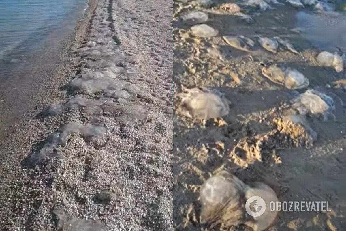 Азовское море атаковали медузы