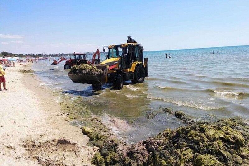 Море в Одесі покрилося водоростями