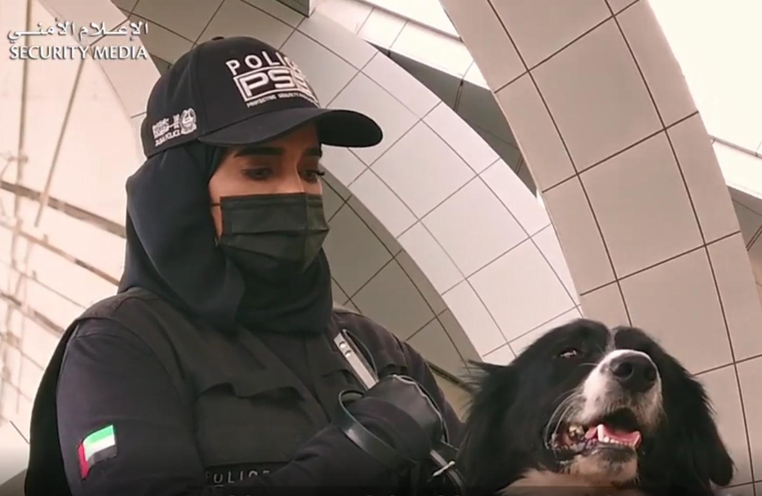 В ОАЭ собак научили искать больных COVID-19
